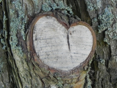 suède, coeur, valentine